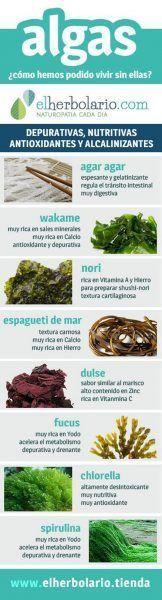 Las algas comestibles, auténticos superalimentos