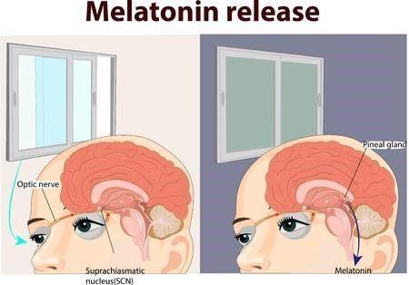 la melatonina ayuda a dormir mejor