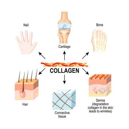 9 beneficios del colágeno